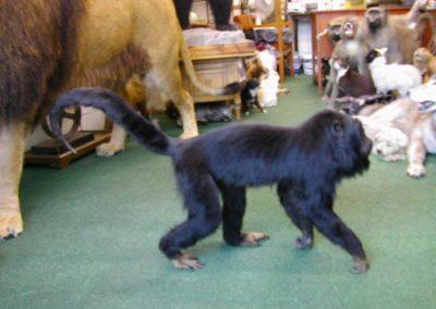 Foreign Mammals 152