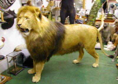 Foreign Mammals 157