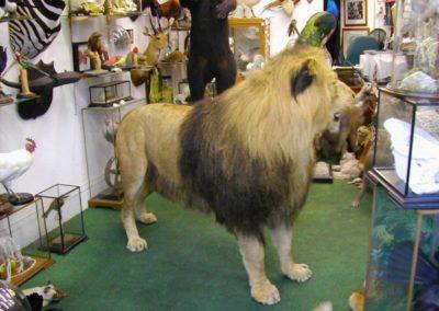 Foreign Mammals 158