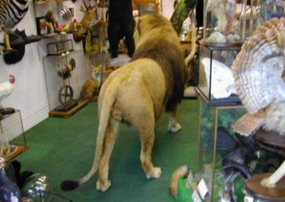 Foreign Mammals 159