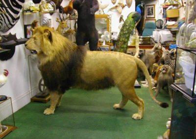 Foreign Mammals 160