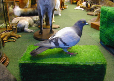 British Birds 278