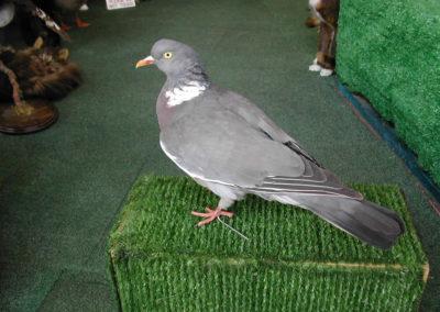 British Birds 291