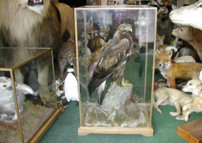 British Birds 300