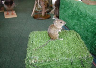 British Mammals 218
