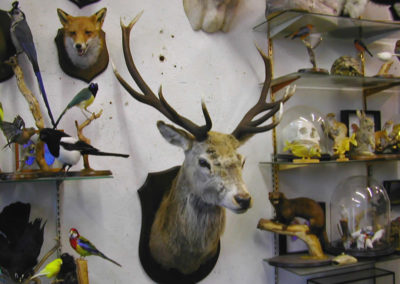 British Mammals 223