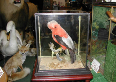 Foreign Birds 164