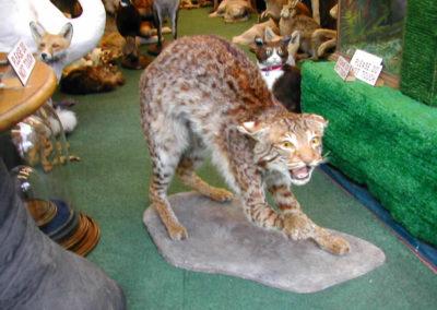 Foreign Mammals 164