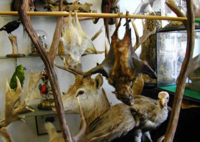 Foreign Mammals 168