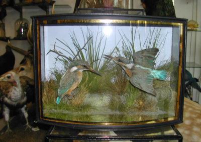 British Birds 303