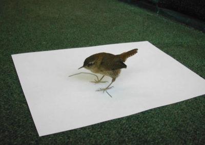 British Birds 304