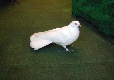 British Birds 306