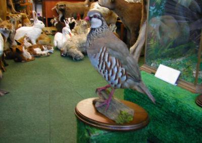 British Birds 307