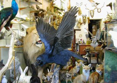 British Birds 312