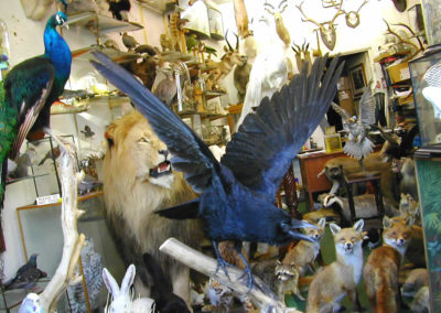 British Birds 313