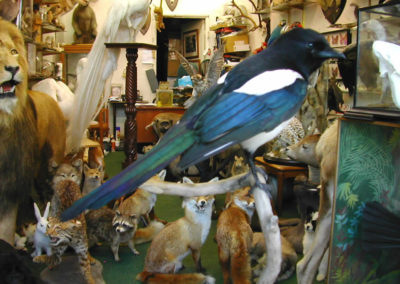 British Birds 314