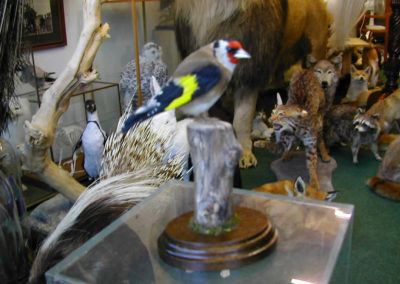 British Birds 315