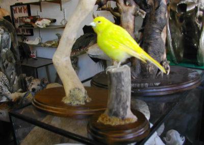 Foreign Birds 167
