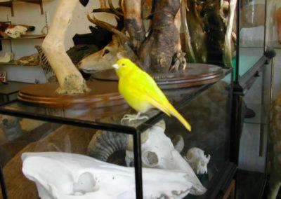 Foreign Birds 168