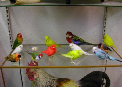 Foreign Birds 169