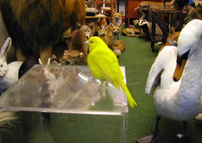 Foreign Birds 176
