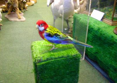Foreign Birds 177