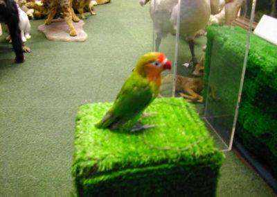 Foreign Birds 178