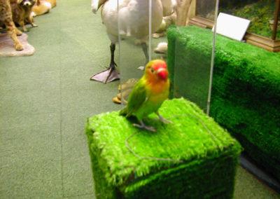 Foreign Birds 179
