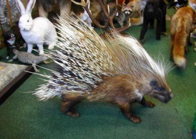 Foreign Mammals 175